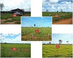 Fazenda em Nova Crixas GO à Venda Agropecuária