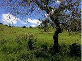 Código.mg.000038. Chácara de 10.000M2 em Cambuí - Sul de Minas Gerais