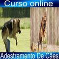 Curso Online Adestramento de Cães