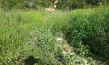Fazenda 211,4830 Hectares por 390000