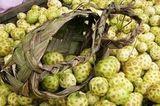 Fruto Noni Abatiá Paraná